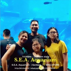 SEA Aquarium All day + Maritime  (Adult)